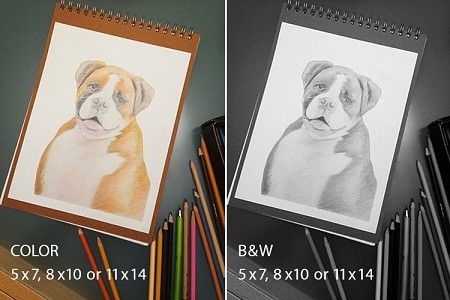 Custom Pet Portrait / Illustration